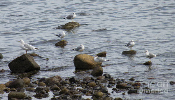 Photograph - Gulls Resting by Donna L Munro