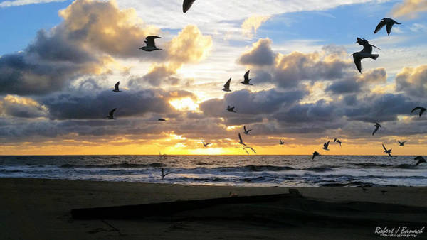 Photograph - Gulls Take Wing by Robert Banach