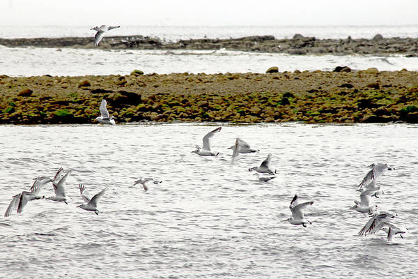 Photograph - Gulls by Tony Murtagh