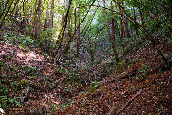 Photograph - Gully On Mt Tamalpais #2 by Ben Upham III