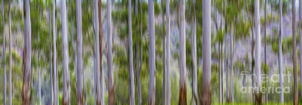 Wall Art - Photograph - Gum Tree Abstract by Sheila Smart Fine Art Photography