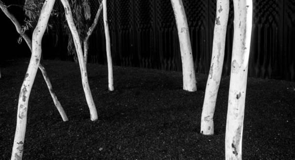 Photograph - Gum Trees - Canberra - Australia by Steven Ralser