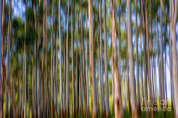 Wall Art - Photograph - Gum Trees by Sheila Smart Fine Art Photography