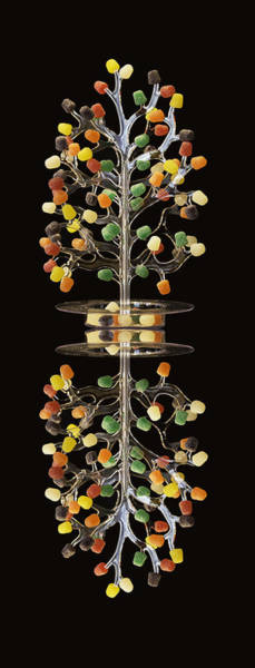 Photograph - Gumdrop Tree Reflection by Jim Dollar