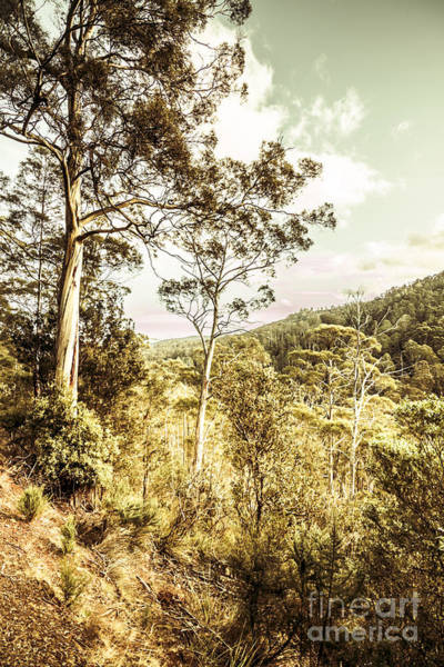 Eucalyptus Photograph - Gumtree Bushland by Jorgo Photography - Wall Art Gallery