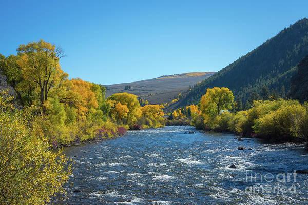 Photograph - Gunnison River In Autumn by Michael Ver Sprill