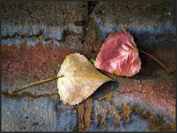 Photograph - Gutter Showdown by Harriet Feagin