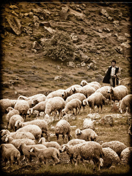 Photograph - Guzelyurt, Turkey - Shepherd by Mark Forte