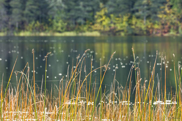 Elmendorf Photograph - Gwen Lake by Ray Bulson