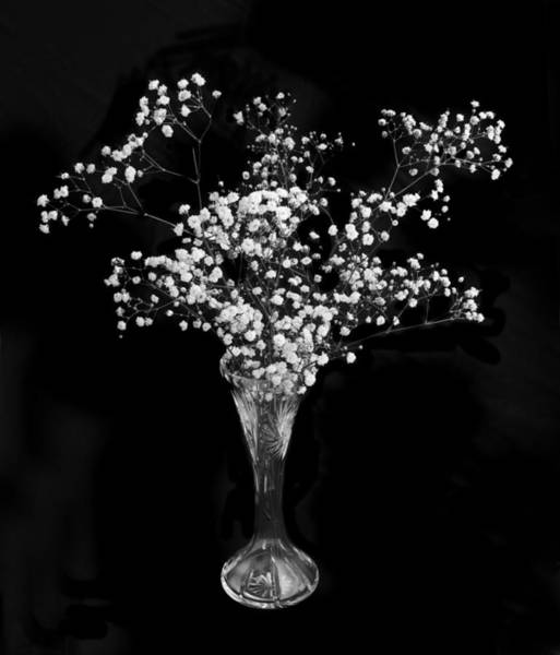 Flowers In A Vase Photograph - Gypsophila Black And White by Terence Davis