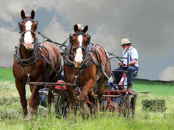 Plow Horses Photograph - h27 by Tom Griffithe