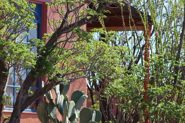 Photograph - Hacienda by Colleen Cornelius