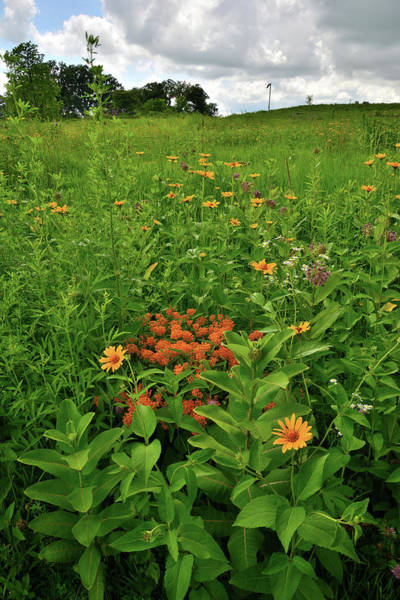 Photograph - Hackmatack Wildflowers On An Overcast Day by Ray Mathis