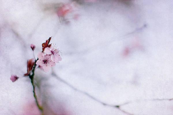 Cherry Blossoms Photograph - Haiku Two by Rebecca Cozart