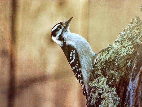 Photograph - Hairy Woodpecker by Bob Orsillo
