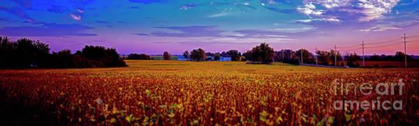Photograph - Halegus Lakewood Bean Field Fall Evening  by Tom Jelen
