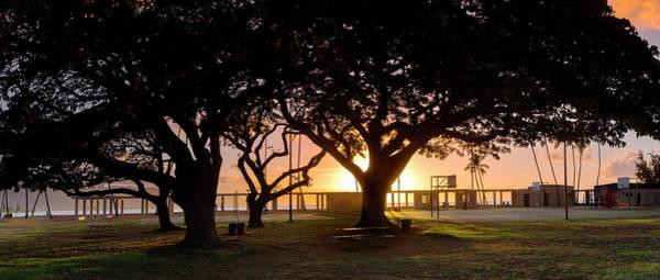 Pod Photograph - Haleiwa Monkey Pod by Sean Davey