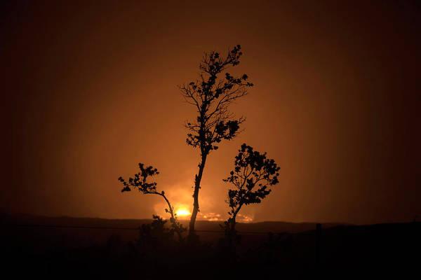 Ohia Photograph - Halemaumau Ohia Silhouette by Christopher Johnson