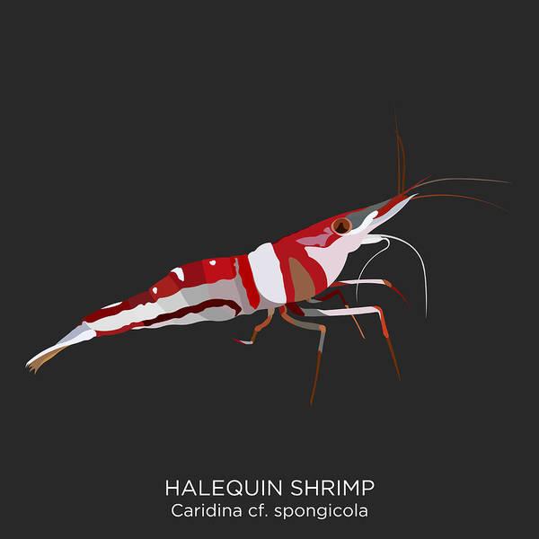 Ingredient Digital Art - Halequin Shrimp, Animal by Witsarut Ditpae