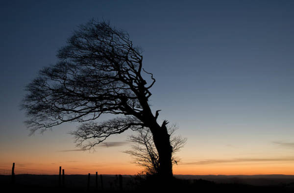 Photograph - Half A Tree On Raddon Top by Pete Hemington