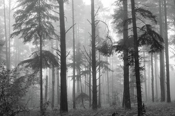 Boreal Forest Photograph - Half Century by Mary Amerman