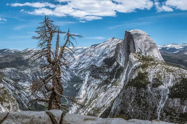 Wall Art - Photograph - Half Dome And Tree by Tim Sullivan