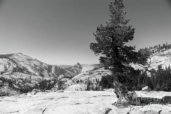 Photograph - Half Dome And Yosemite Valley From Olmsted Point Tioga Pass Yosemite California Dsc04274bw by Wingsdomain Art and Photography