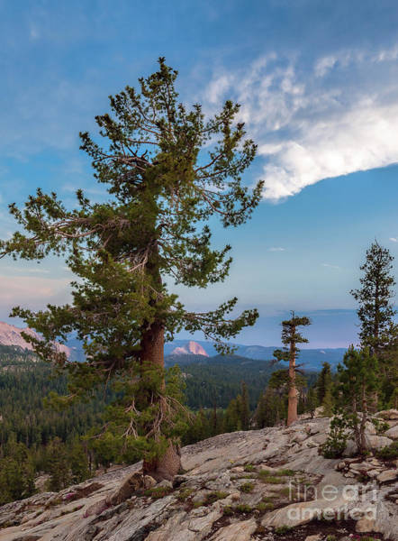 Photograph - Half Dome Through The Trees by Sharon Seaward