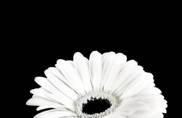 Comtemporary Photograph - Half Moon Daisy by Marsha Heiken