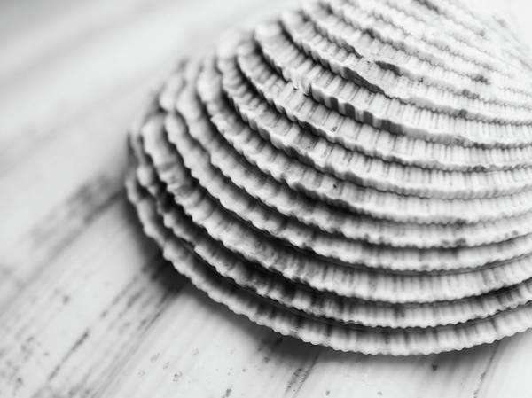 Marine Layer Photograph - Half Shell by Tom Druin