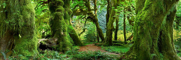 Rain Forest Photograph - Hall Of Mosses - Craigbill.com - Open Edition by Craig Bill