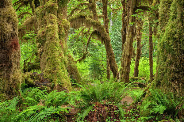 Olympic Club Photograph - Hall Of Mosses by Greg Vaughn
