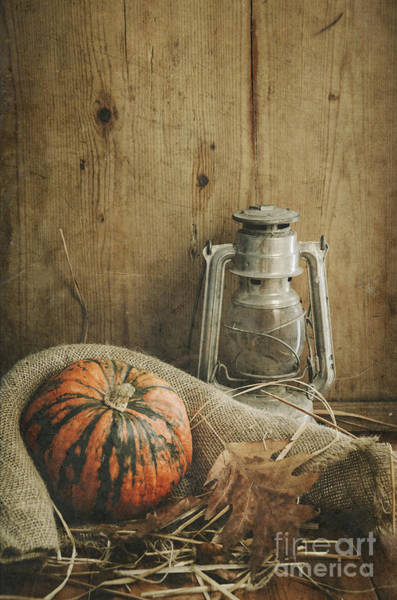 Wall Art - Photograph - Halloween Compositin by Jelena Jovanovic
