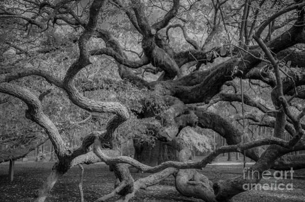 Photograph - Halloween Oak by Dale Powell