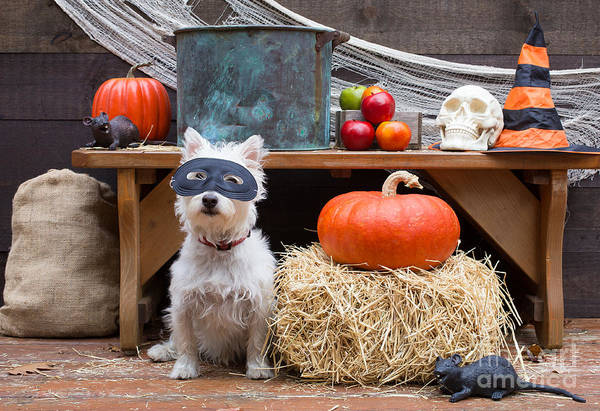 Photograph - Halloween Party Dog by Edward Fielding