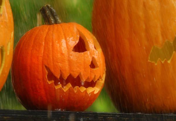 Wall Art - Photograph - Halloween Pumpkin by Craig Incardone