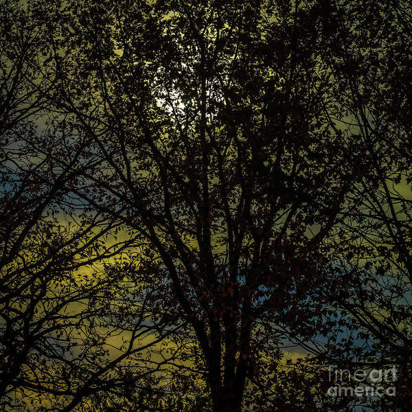Photograph - Halloween Sky by Roger Monahan