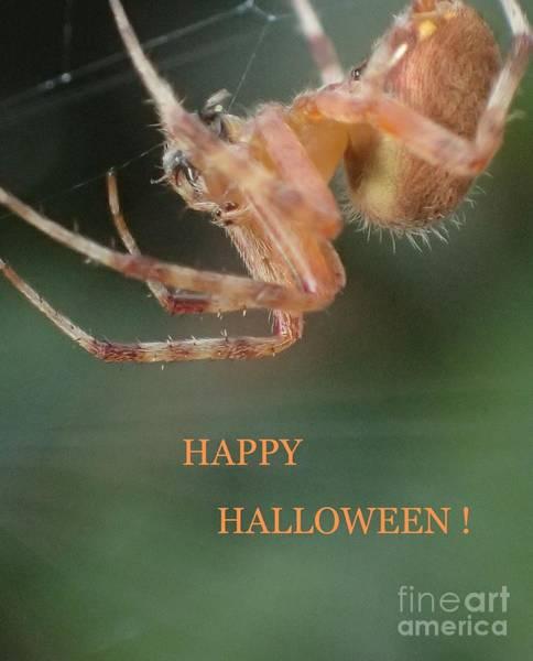 Photograph - Halloween Spider by Christina Verdgeline
