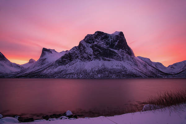 Photograph - Halo In Pink by Alex Lapidus