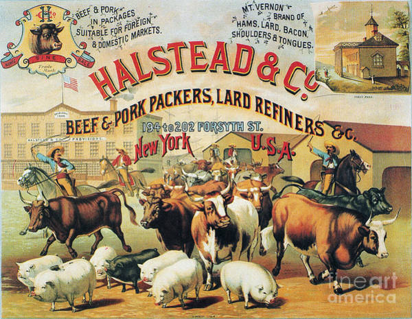 Photograph - Halstead & Co., 1886 by Granger