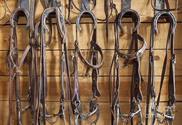 Entrada Photograph - Halters In A Tack Room by Bryan Mullennix