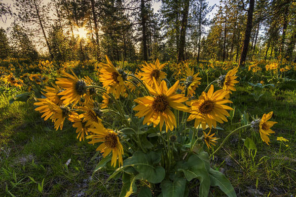 Photograph - Hamblen Park Sunshine by Mark Kiver