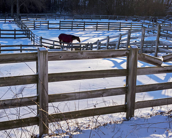 Photograph - Hamilton Ma Equestrian Farm Blanket Of Winter Snow Fences by Toby McGuire