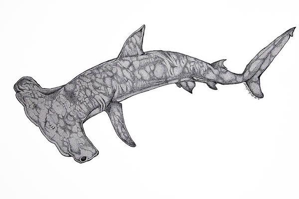 Hammer Head Shark Wall Art - Drawing - Hammer Head Shark by Nick Gustafson