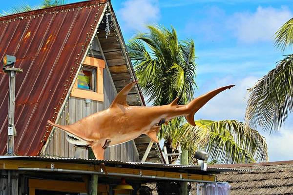 Hammer Head Shark Wall Art - Photograph - Hammerhead Shark Statue Over Building by Andrew Davis