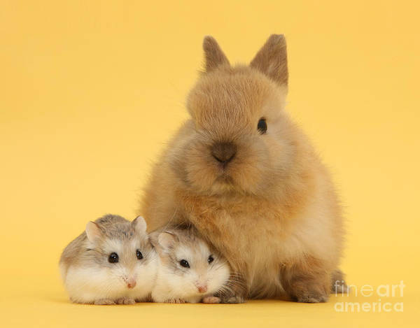 Hamster Photograph - Hammies And Easter Bunny by Warren Photographic
