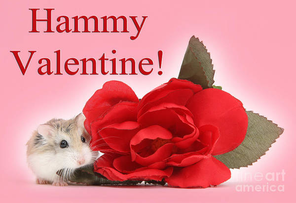Photograph - Hammy Valentine by Warren Photographic