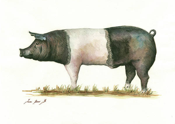 Pig Painting - Hampshire Pig by Juan Bosco