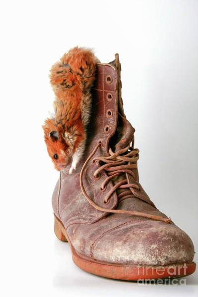 Golden Hamster Photograph - Hamster On Boot  by Yedidya yos mizrachi
