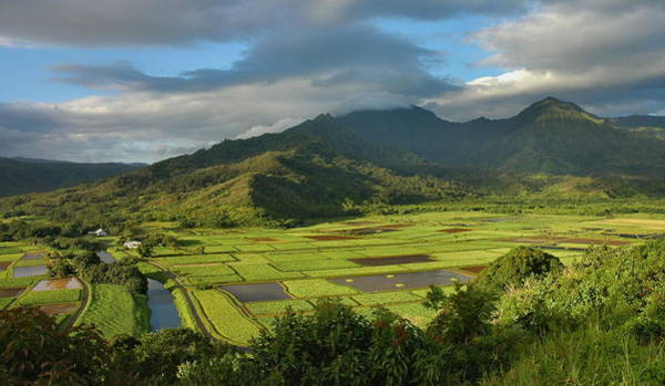 Wall Art - Photograph - Hanalei Valley by Stephen  Vecchiotti